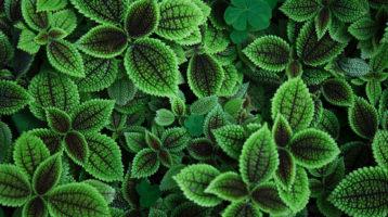 Jesienią zajęcia terenowe z Botaniki